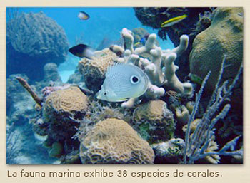 Diving off Playa Maria la Gorda to enjoy 38 species of coral formations