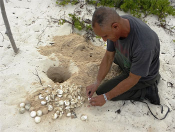 protecting three varieties of turtles which nest on the Peninsula