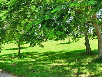Parque Lenin © Ecobio, flickr.com