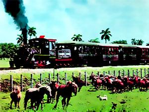 Tren a vapor y caballos a pie — Locomotora Hermanos Ameijeilas 1431