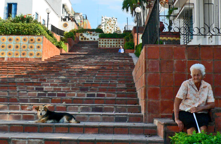 This guard dog is never far from his master, a kind abuela living on Caridad street