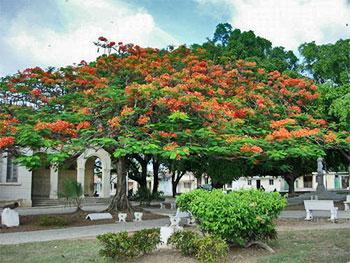 Un flamboyan porte un ombrage apprécié au Parque Salvador Cisneros Betancourt © Stepanov, panoramio •|• Casa Castellanos © ron0315, panoramio