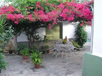 Flamboyant sur le patio d'Olivia © Cuba by bike 2006